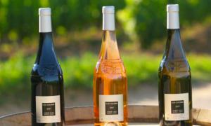 Vacanza in Corsica: viaggio tra i migliori vini del territorio