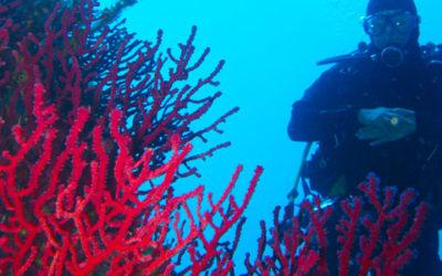 Immersioni in Corsica: diving nei fondali marini delle isole Lavezzi