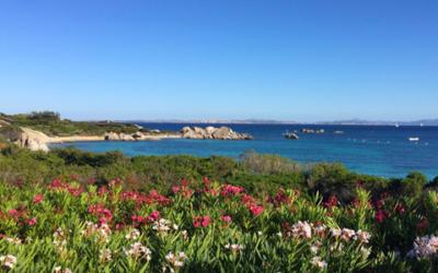 5 cose da fotografare sull'Isola di Cavallo Corsica